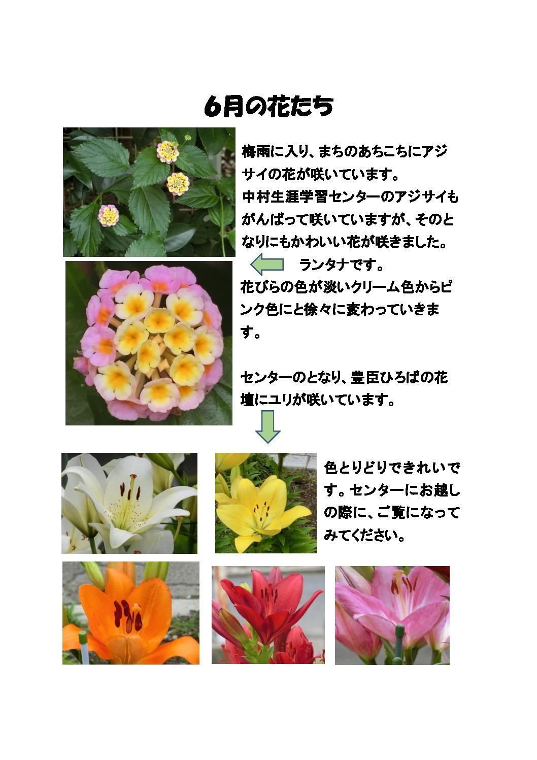 thumbnail of 6月の花たち