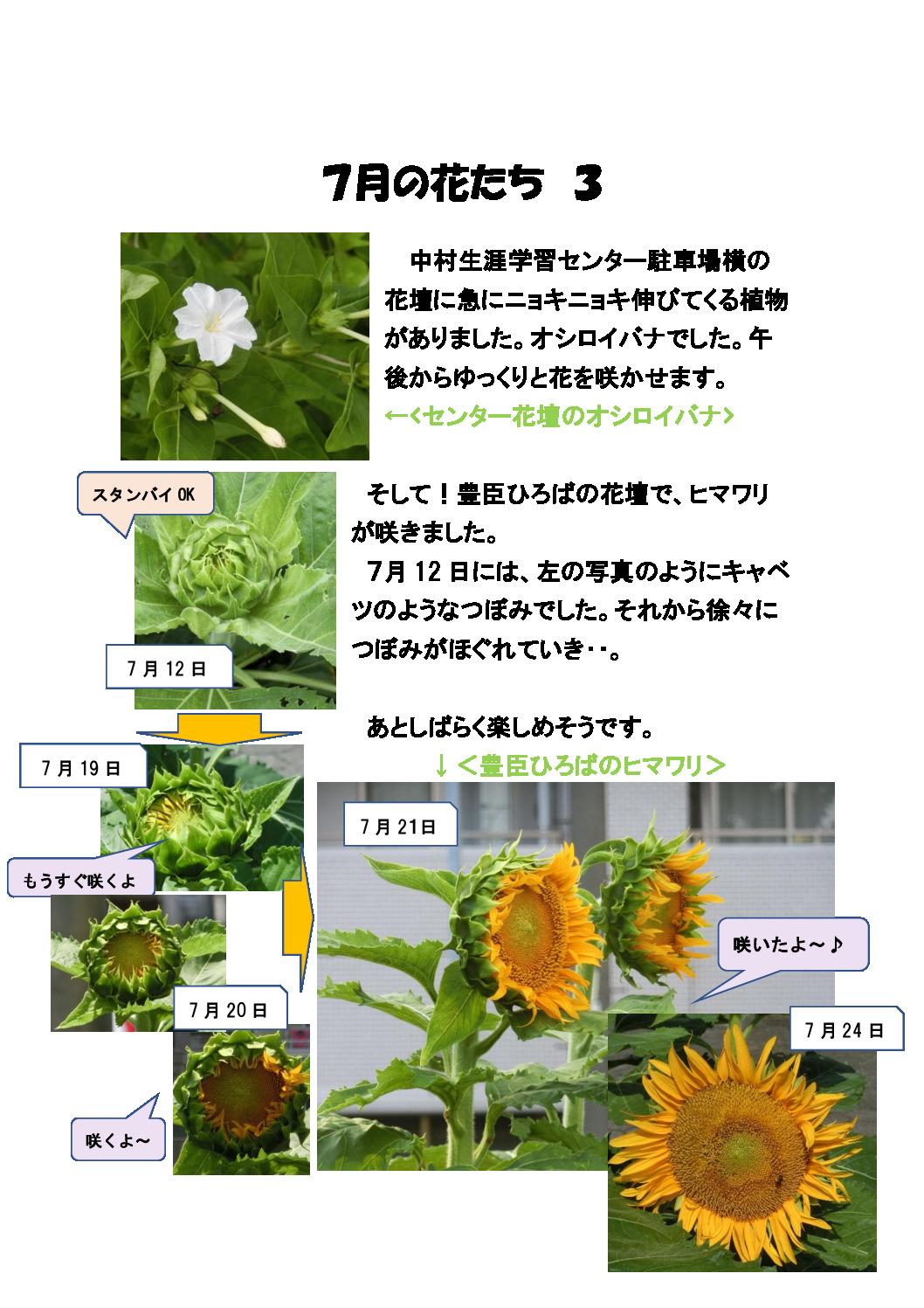 thumbnail of 7月の花たち3
