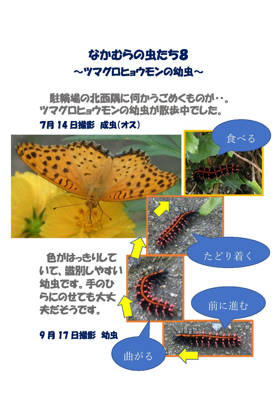 thumbnail of なかむらの虫たち8 ~ツマグロヒョウモンの幼虫~