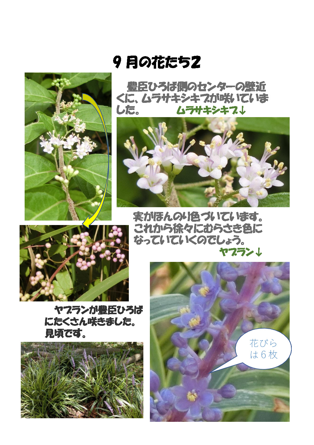 thumbnail of 9月の花たち 2