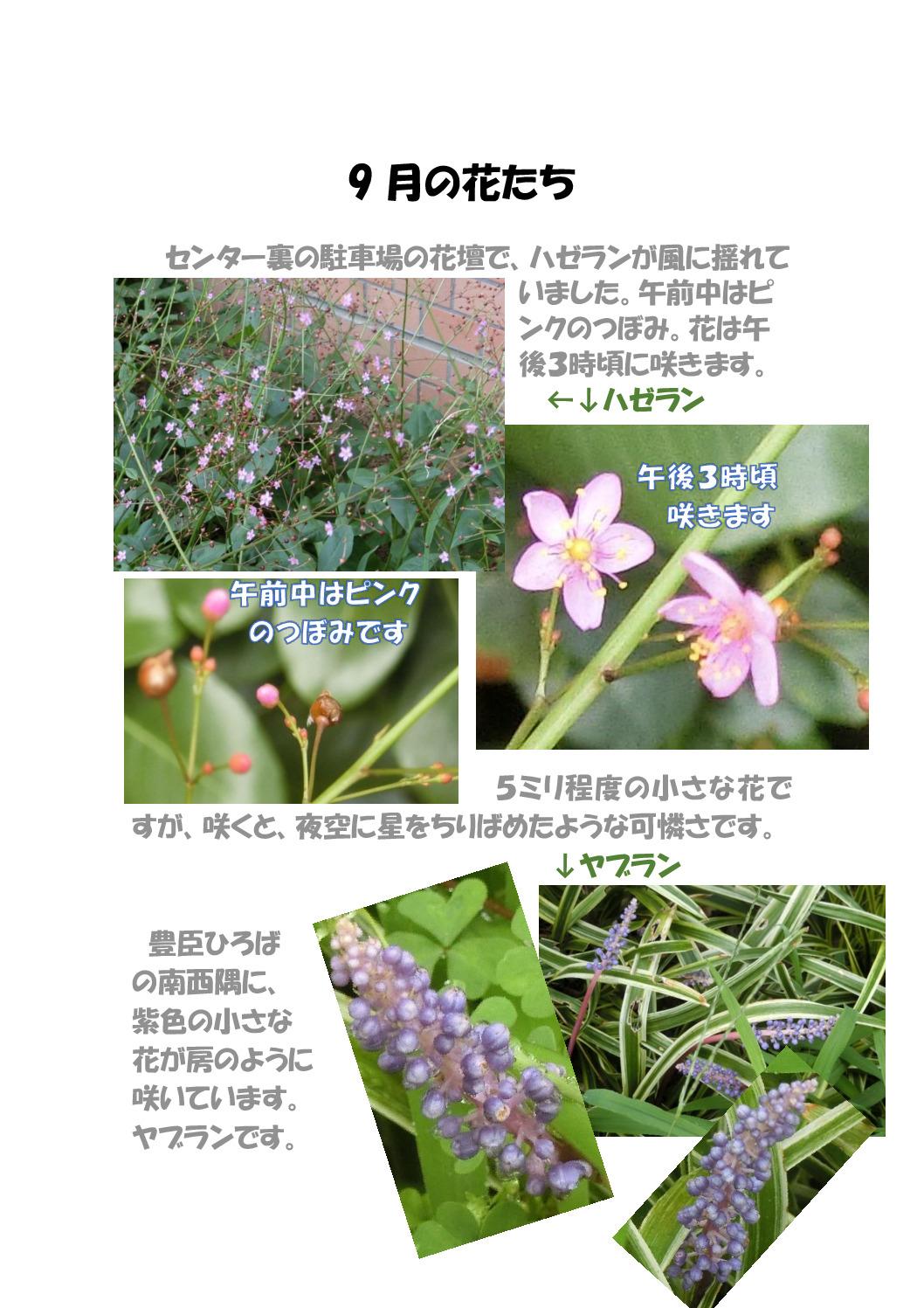 thumbnail of 9月の花たち