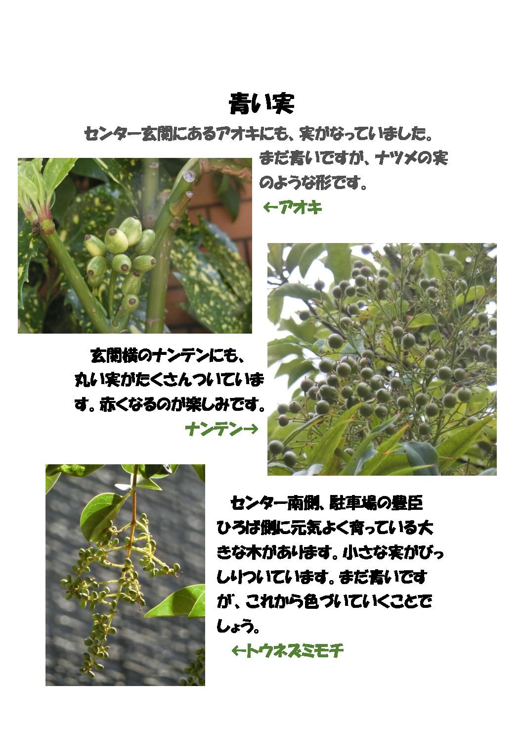 thumbnail of 青い実
